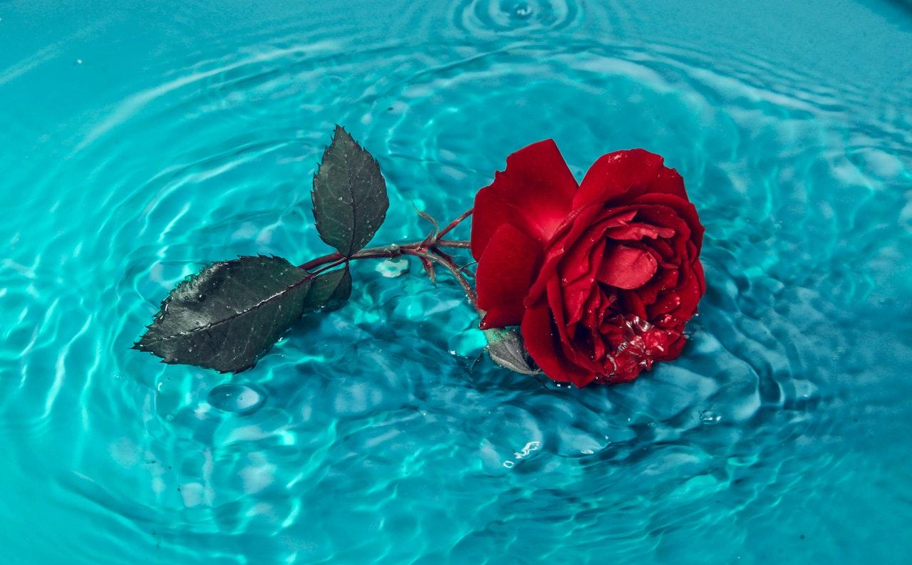 Beneficios de usar tónico de agua de rosas
