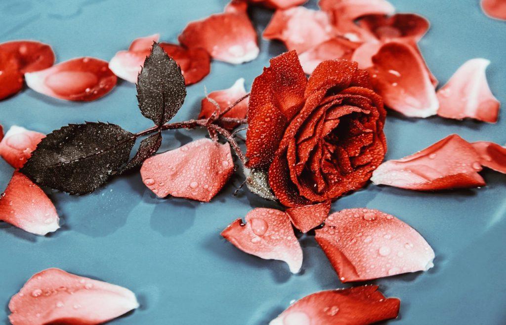 Tónico agua de rosas: Propiedades y cómo hacer uno